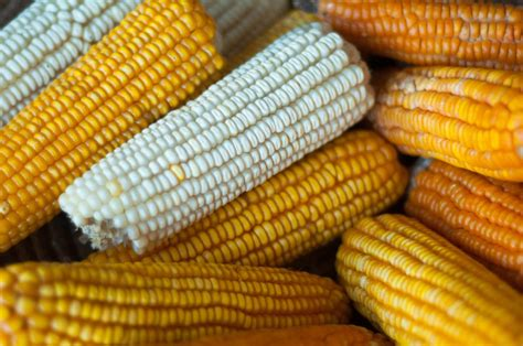 The Maize Value Chain in Tanzania | SAIIA