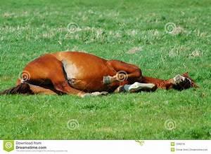 Tired Horse Royalty Free Stock Image - Image: 7336216