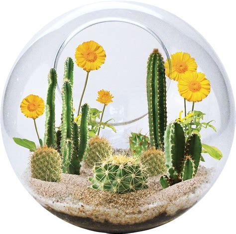 Mini Terrarium Glas by Mini Desertscape Glass Terrarium Brain Toys