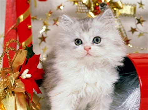 Beautiful Cats New Hd Wallpapers 2013  All About Hd