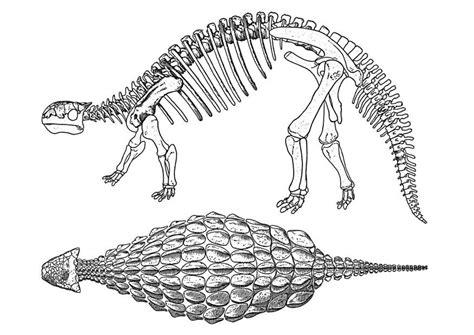 Kleurplaat Grote Dinosaurus by Kleurplaat Dinosaurus Ankylosaurus Afb 29402 Images