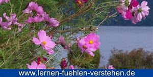Wann Blüht Flieder : permakultur garten dirt pinterest permakultur ~ Lizthompson.info Haus und Dekorationen