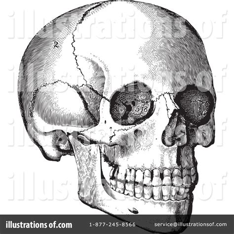 Skull Clipart Illustration Bestvector