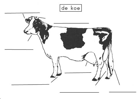 Kleurplaat Koe Melken by 1000 Images About Thema Boerderij On Cow