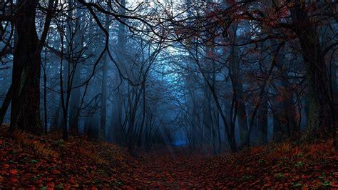 Autumn Forest Wallpaper For Desktop