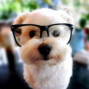 Animals Wearing Glasses Looking Super Cute - XciteFun.net