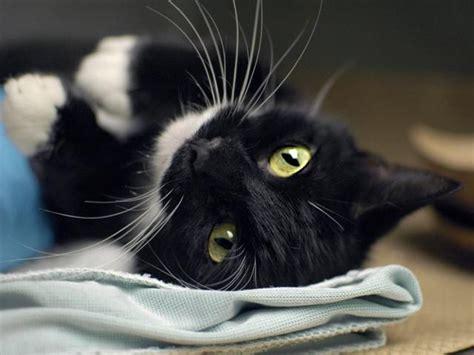 Adoptable kitties for PathClan Th?id=OIP