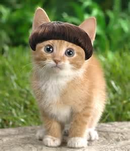 a cat in speedart bowlcut cat by scavengerv2 on deviantart