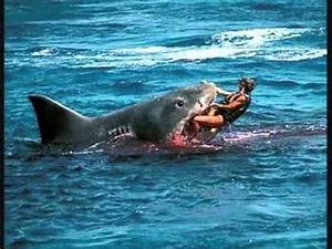 Shark eats Man - YouTube