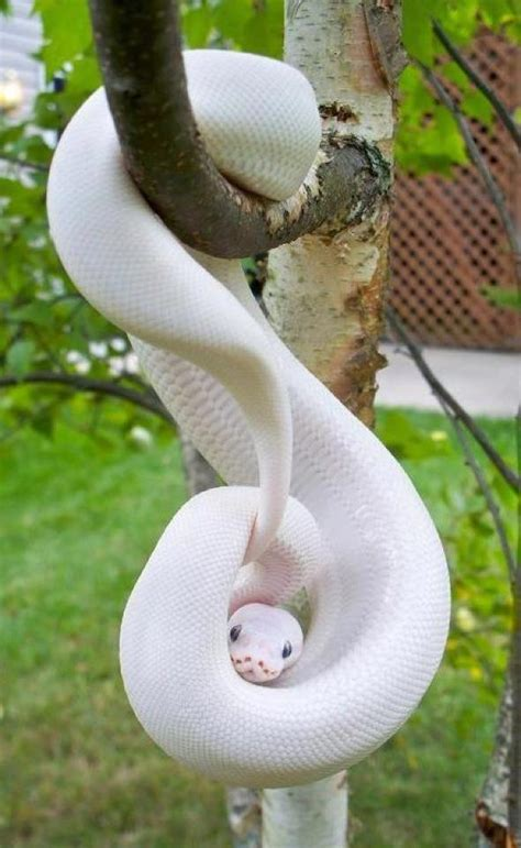 cute funny  cute snake