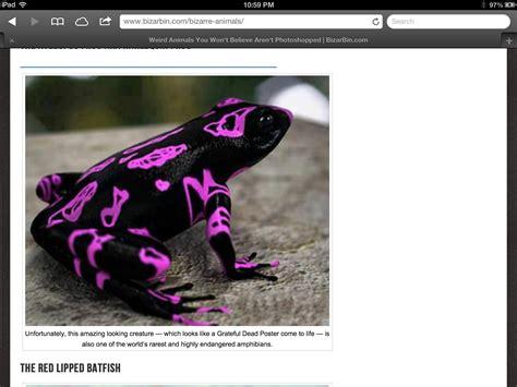 Rare frong | Rare, Animals, Frog
