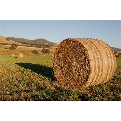 File:Round hay bale at dawn02.jpg - Wikipedia