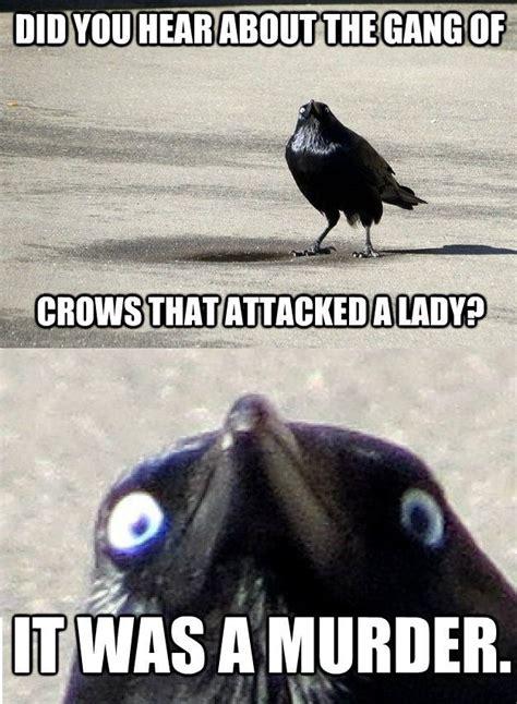 Crow Meme - crow meme attacked murder memes comics pinterest