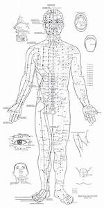 Acupuncture Points Of The Front Body  U2013 Pearson Pilates