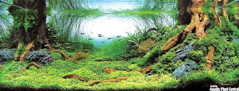 Aquascape Ada - aquascaping la triche des concours photos forum plantes