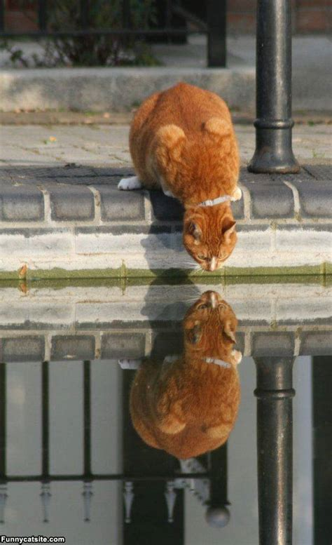 animals reflection   water xcitefunnet