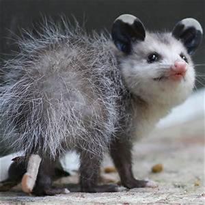 Happy Possum | Bored Panda