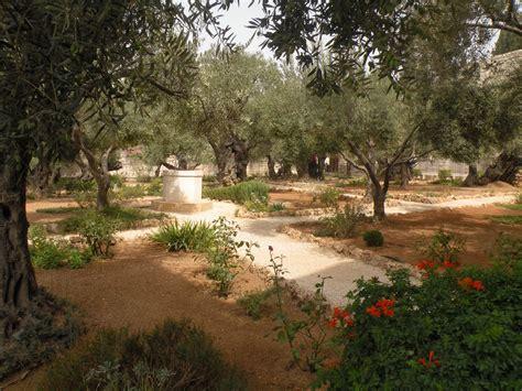 Garden Of Gethsemane Bible by The Salty Gardener Garden Of Gethsemane