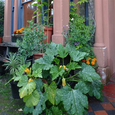 container gardening growing vegetables in planters
