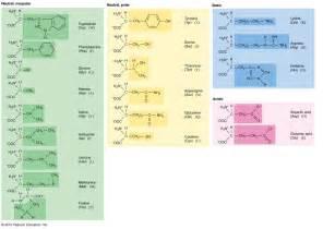 Primary Amino Acids