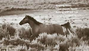 Horse Quotes an... Free Horses Quotes