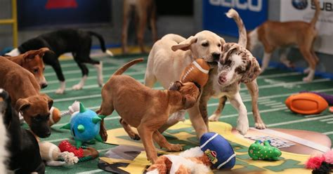 puppy bowl    scenes   years cutest event collider