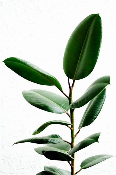 Plants Easy Care Potted Flowering Leaves Types