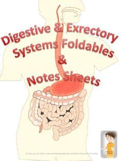 grade science images body systems human