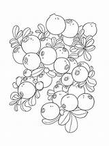 Coloring Pages Blueberries Cowberry Berries Cartoon Fruits Template Printable Colors Mycoloring Recommended sketch template