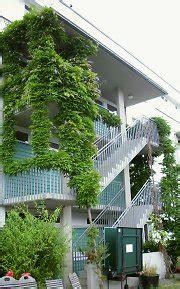 balkonbegruenung balkonbepflanzung mit balkonpflanzen