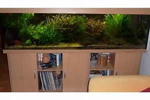 Komplett Aquarium Kaufen : komplett eingerichtetes aquarium 200x50x60 600l in hofheim fische aquaristik kaufen und ~ Eleganceandgraceweddings.com Haus und Dekorationen