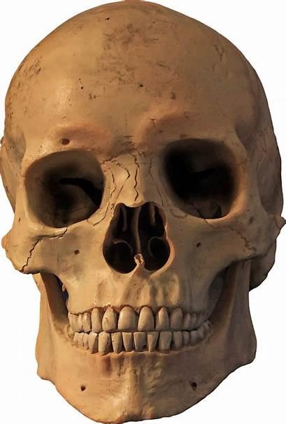 Skeleton Transparent Skull Head Clip Clipart Human