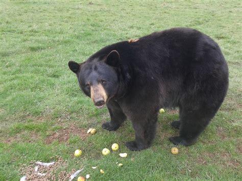 fotos gratis zoo mamifero animales vertebrado el oso