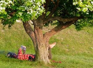 Arbre à Croissance Rapide Pour Ombre : quel arbre fruitier pousse rapidement ~ Premium-room.com Idées de Décoration