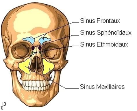 sinusites d origine dentaire conseil dentaire dr hauteville