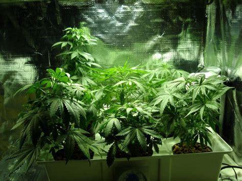 Gestalltung Des Hanfanbau Indoor Growroom