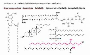 Solved  Label Each Lipid Diagram To The Appropriate Classi