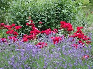 Rosen Und Lavendel : rosen und stauden mit nostalgieflair planungswelten ~ Yasmunasinghe.com Haus und Dekorationen