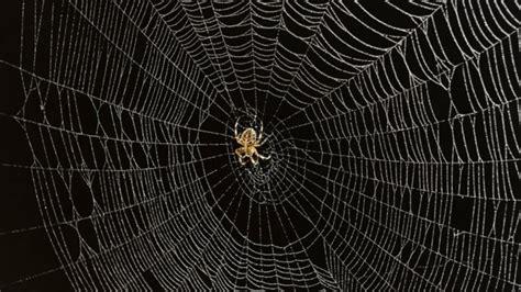 la toile d araignee l araign 233 e cette architecte ici radio canada ca