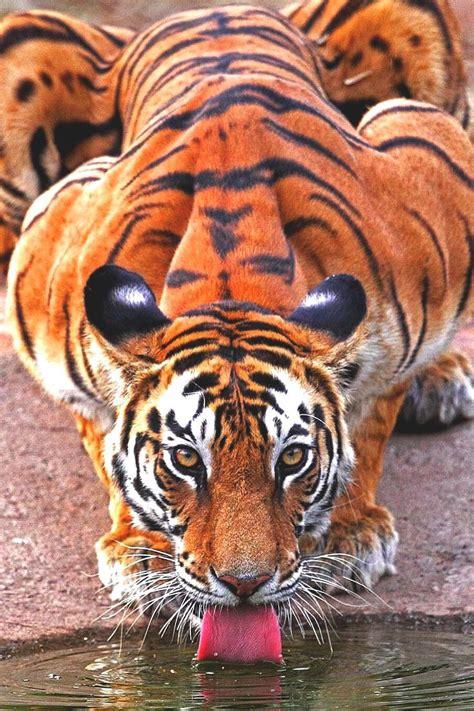 Lsleofskye The World Most Beautiful Animal