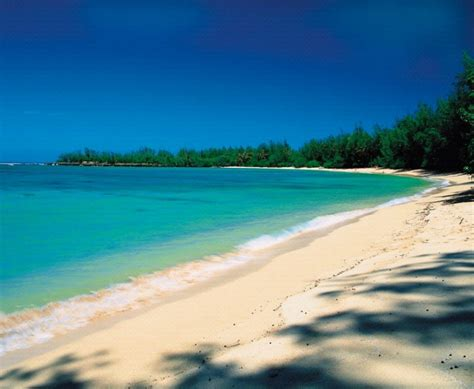 sparkling voyages turtle bay resort