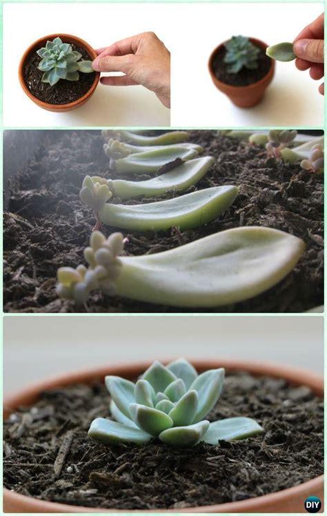 indoor succulent garden diy indoor outdoor succulent garden ideas projects