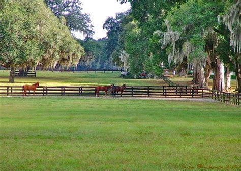 Horse Farm Ocala Florida