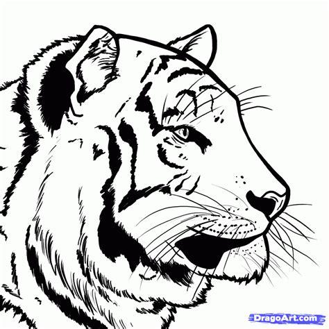 draw  bengal tiger draw tigers step  step