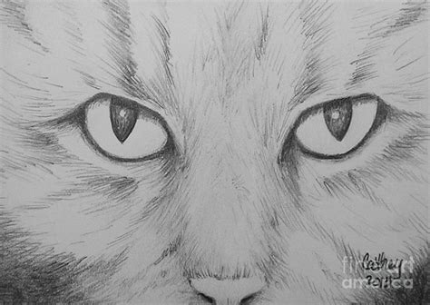 Cats Eyes Drawing By Catherine Howley