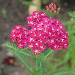 Rot Blhende Pflanzen Und Blumen Bestimmen