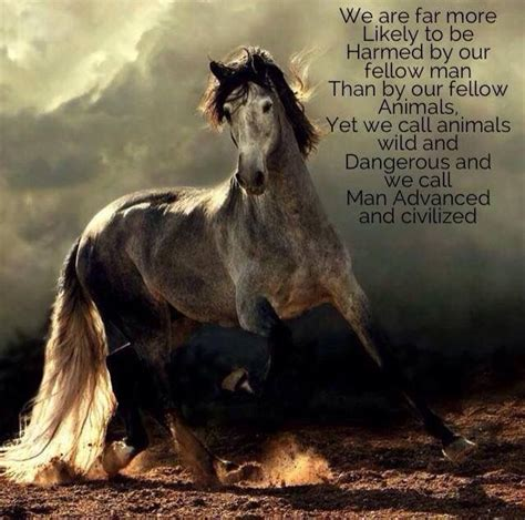 quotes horse dog
