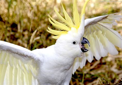 Top 10 Pet Cockatoo Parrot Questions Answered