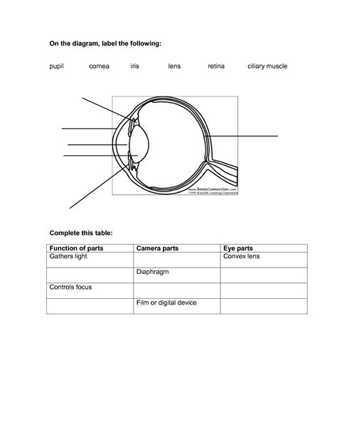 Eye Diagram To Label Kifd by 8 Best Images Of Lens Diagram Worksheet Microscope With