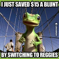geico gecko images animal pictures funny